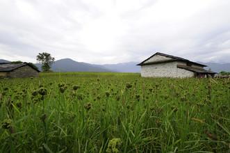 Markus Hertrich, Hirse Feld (Nepal, Asien)