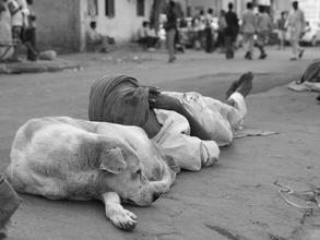 Jagdev Singh, Pillow (Indien, Asien)