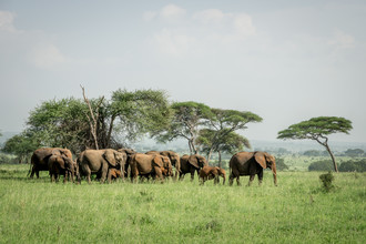David Grigo, Elefanten im Tarangire-Nationalpark in Tansania (Tansania, Afrika)