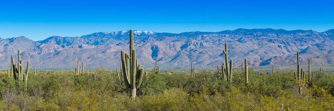 Marc Rasmus, Cacti Panorama (Vereinigte Staaten, Nordamerika)