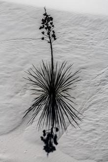 Marc Rasmus, Wüstenschönheit (Vereinigte Staaten, Nordamerika)