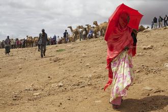 Christina Feldt, Red lady at the camel market in Babille, Eastern Ethiopia (Äthiopien, Afrika)
