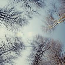 Nadja Jacke, trees and blue sky - multiple exposure (Germany, Europe)