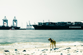 Gabriele Brummer, Dog in Hamburg (Germany, Europe)