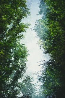 Nadja Jacke, Bäume und blauer Himmel (Deutschland, Europa)