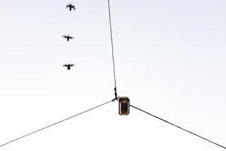 Markus Green, Drei Vögel neben dem Drahtseil (Deutschland, Europa)