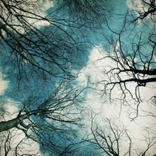 blick nach oben - Fineart photography by Manuela Deigert