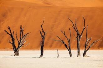 Felix Salomon, Desert trees (Namibia, Africa)