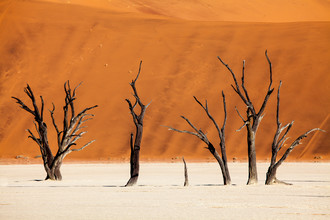 Felix Salomon, Desert trees (Namibia, Afrika)