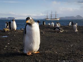 Jens Rosbach, Eselspinguine mit Segelschiff (Antarktis, Europa)