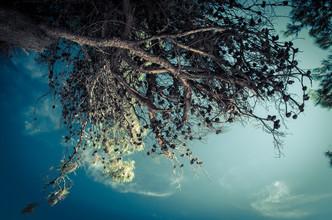 Gabriele Brummer, The Tree (Croatia, Europe)