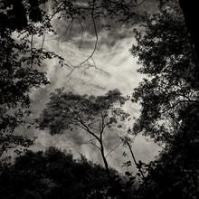 J. Daniel Hunger, Baum #13 (Italien, Europa)