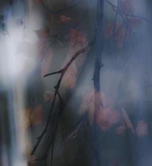 Jens Rosbach, Herbstlicht (Deutschland, Europa)