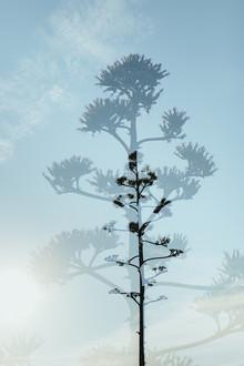 Nadja Jacke, Blüte der Agave vor blauem Himmel - Doppelbelichtung (Spanien, Europa)