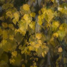 Herbstfarben - fotokunst von Jens Rosbach