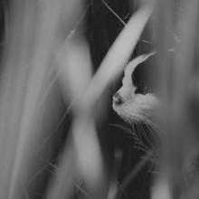 Nadja Jacke, cat is hiding (Germany, Europe)