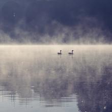 Nadja Jacke, 2 Gänse auf einem See mit morgendlichem Nebel (Deutschland, Europa)