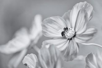 Ralf Gromann, Last Blossom (Deutschland, Europa)