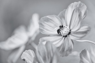 Ralf Gromann, Last Blossom (Germany, Europe)