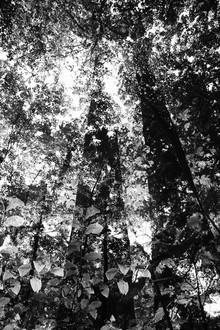 Rolf Bökemeier, Bäume (Deutschland, Europa)