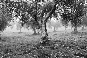 Anna Kress, Olivos in Trás-os-Montes, Portugal (Portugal, Europe)