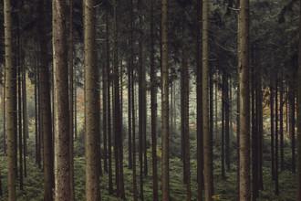 Nadja Jacke, Geborgenheit im Teutoburger Wald (Deutschland, Europa)