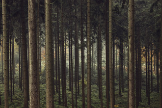 Nadja Jacke, Teutoburg Forest - Autumn (Germany, Europe)