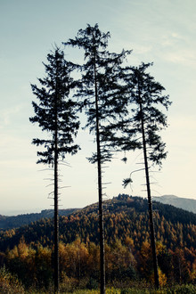Nadja Jacke, Tönsberg im Teutoburger Wald im Herbst (Deutschland, Europa)
