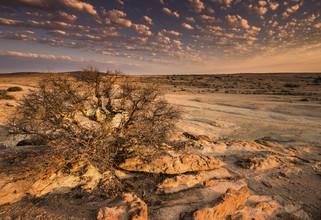 Michael Stein, Blutkoppe (Namibia, Africa)