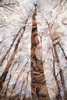Rolf Bökemeier, Wald (Deutschland, Europa)