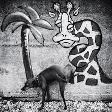 Christine Frick, Hund ... (Italien, Europa)