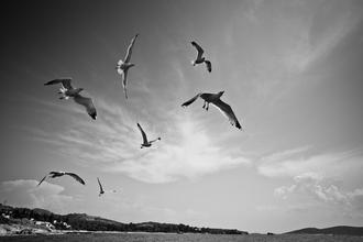 Carla Drago, Seagulls enjoying the wind off the coast of Foça, Turkey (Turkey, Europe)