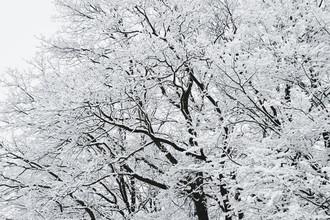 Nadja Jacke, Winterlicher Wald (Deutschland, Europa)