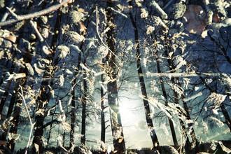 Rolf Bökemeier, Sonnenuntergang im Wald (Deutschland, Europa)