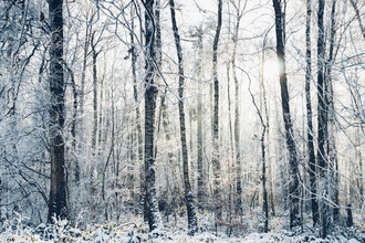 Nadja Jacke, Winter forest with beautiful sunlight (Germany, Europe)