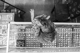 Die Katze - fotokunst von Thomas Neukum