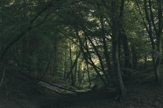 Nadja Jacke, Tief im Wald im Frühling (Deutschland, Europa)