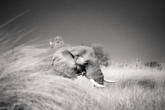 Friends - Fineart photography by Tillmann Konrad