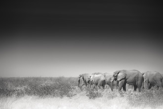 Tillmann Konrad, On their way (Namibia, Africa)