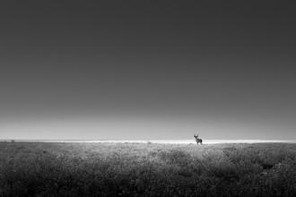 Tillmann Konrad, Lone Kudu (Namibia, Africa)