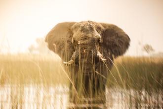 Tillmann Konrad, Close (Botswana, Afrika)