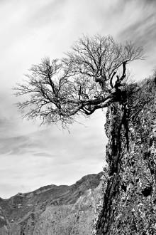 Georg Tausche, Kiefer im Gebirge (Portugal, Europa)