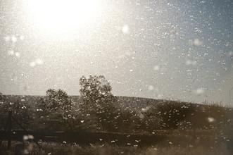 Jac Kritzinger, Locust storm (South Africa, Africa)