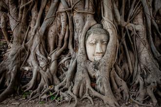 Sebastian Rost, Buddha in Ayutthaya (Thailand, Asia)