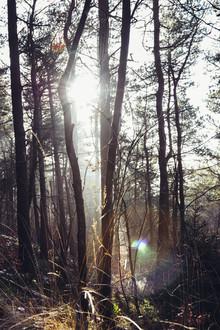Nadja Jacke, Teutoburger Wald in strahlendem Sonnenlicht (Deutschland, Europa)