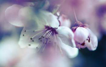 Flower detail - fotokunst von Gabriele Brummer