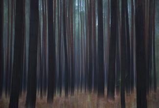 Jens Rosbach, Herbstwald (Deutschland, Europa)