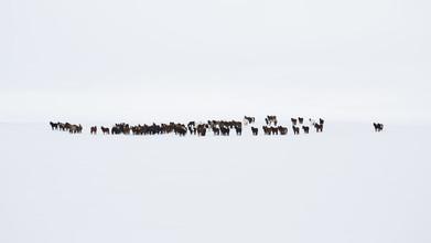 Jens Rosbach, Islandpferde (Island, Europa)