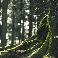 Nadja Jacke, Teutoburg Forest (Germany, Europe)