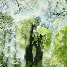 Nadja Jacke, Tender green in spring in the forest (Germany, Europe)